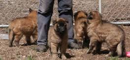 Honey%20Max%20puppies%20040307%203