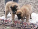 Honey%20Max%20puppies%20040307%2015
